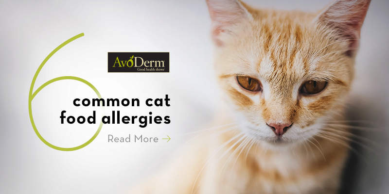 The 6 Most Common Food Allergies in Cats