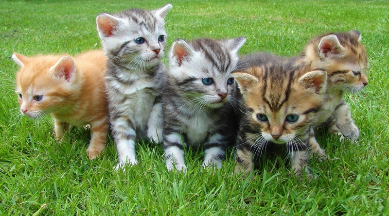What To Expect When Adopting a Kitten or Cat