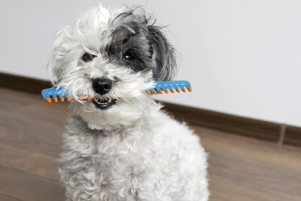 At Home Dog Grooming for Beginners
