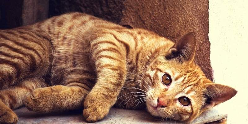 What to Do if Your Cat Has Bad Breath