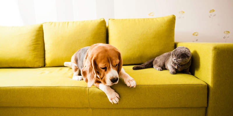 Signs of Depression in Cats and Dogs & How to Help