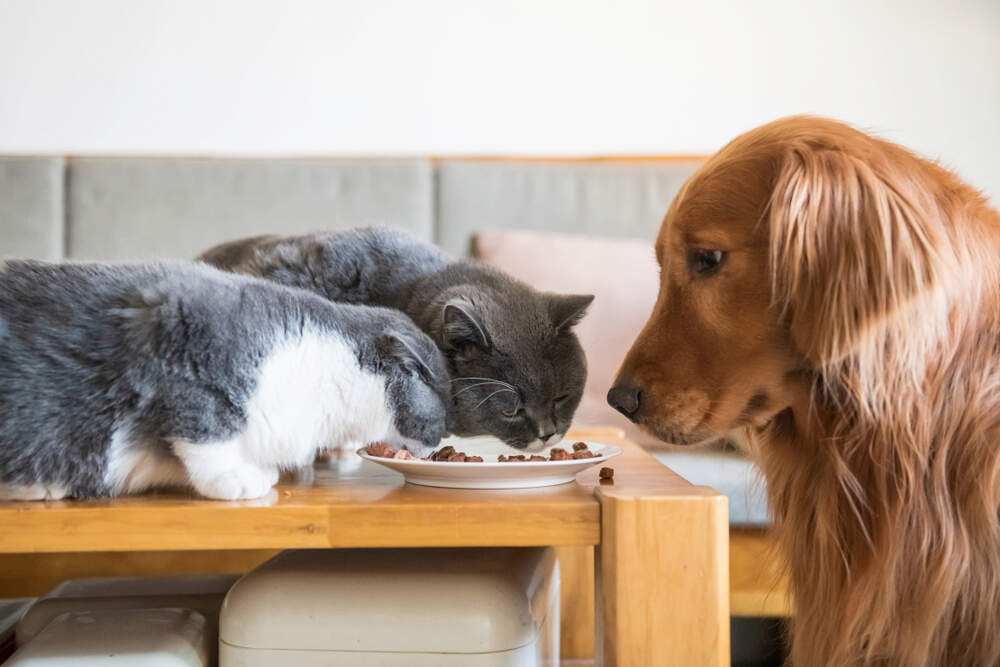 What Is the Difference Between Dog and Cat Food?