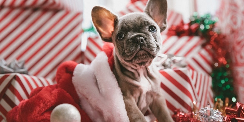 How to Stop Dogs Opening Christmas Gifts