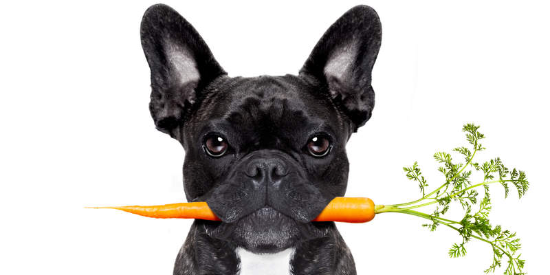10 Fruits and Vegetables that are Safe for Dogs