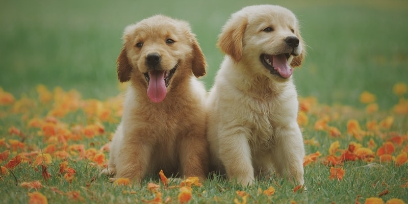 Top 20 Healthiest Dog Breeds