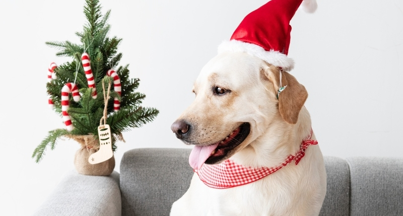 Holidays with Dogs – How to Calm a Dog Down Around Guests