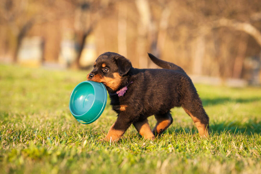 How Long Should a Puppy Eat Puppy Food?