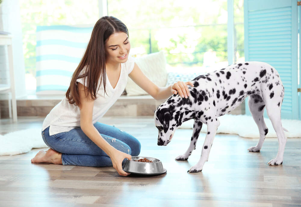 How to Make Dry Dog Food More Appealing to Finicky Eaters