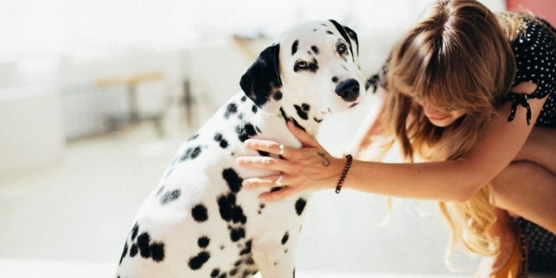 Does Your Dog Like Being Petted – Dog Body Language