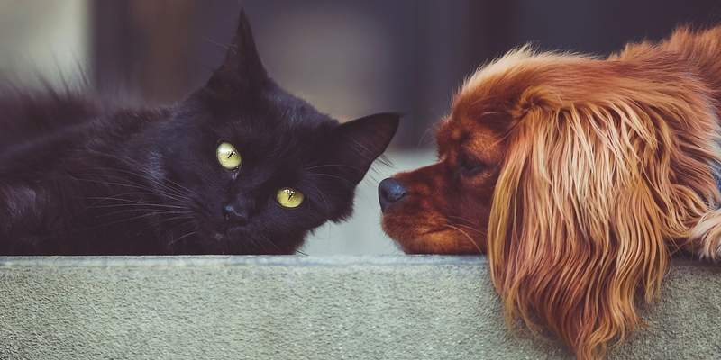 Pet Owner Tricks: Introducing A New Puppy to Your Cat