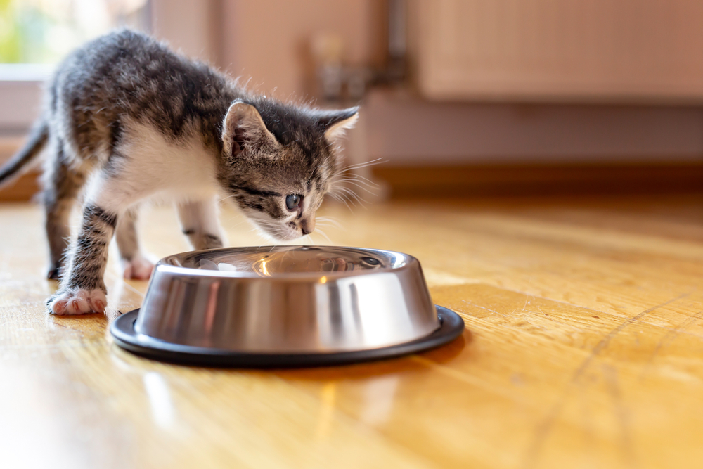Why Won't My Kitten Eat Dry Food?