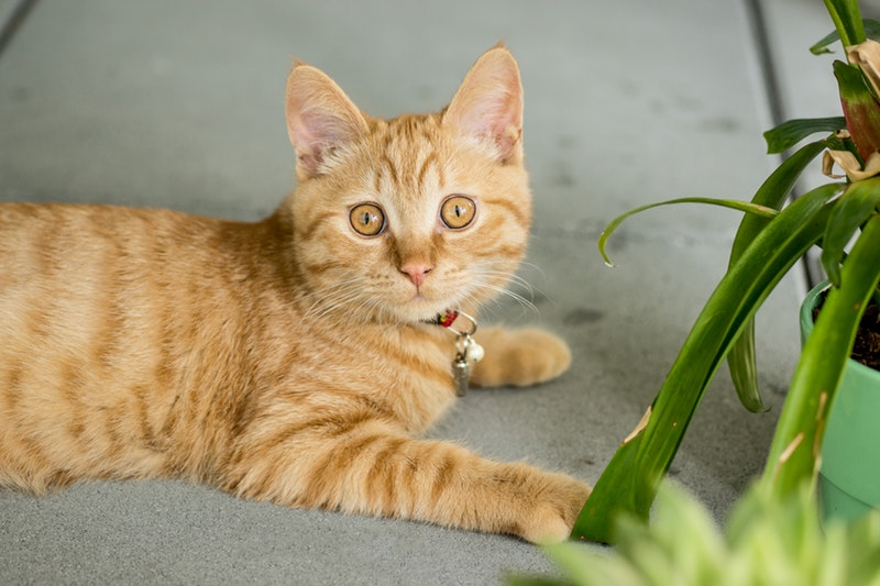 List of Household Plants Cats Can Play With