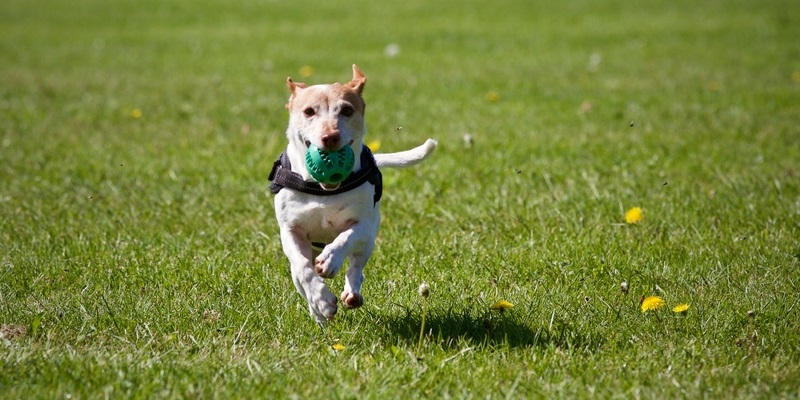 Dog Park Benefits: Tips for Puppy Playtime