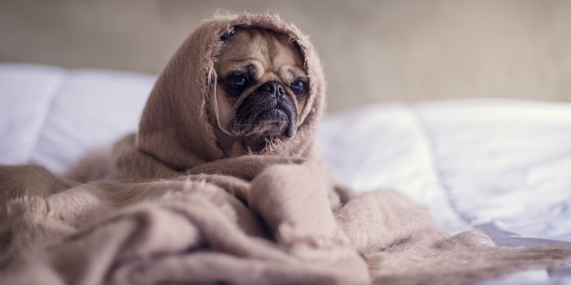 How to Tell if Your Puppy is Sick