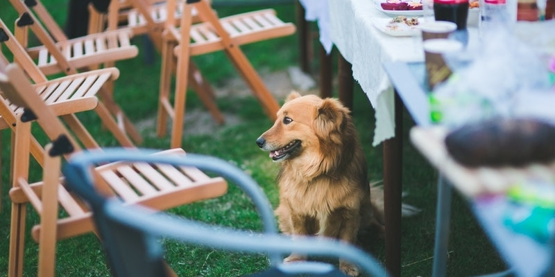 What Table Foods are Safe to Feed Dogs?