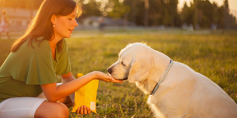 Dog Training 101 – 4 Phases to Building an Unbreakable Bond with Your Dog