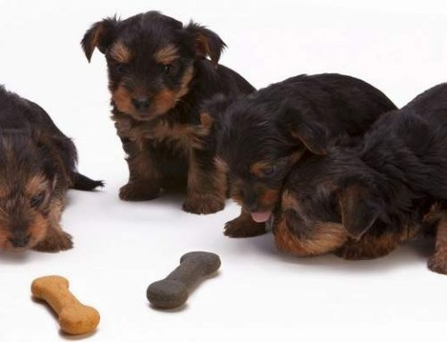 10 Household Foods that are Toxic for Dogs