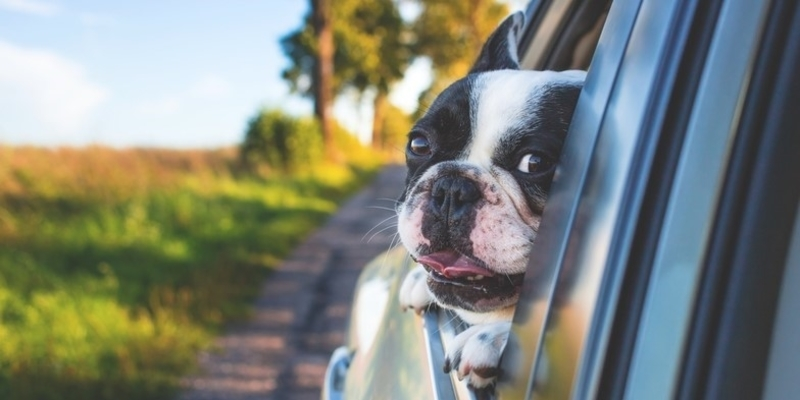 Pet Travel – Tips for Traveling With Dogs & Cats in the Car