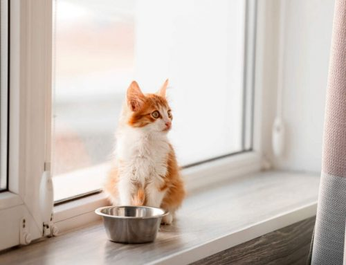 When to Switch from Kitten to Cat Food
