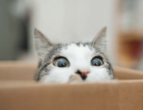 Why Do Cats Do That? Answers to Your Pet Care Questions
